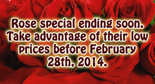 Roses Special