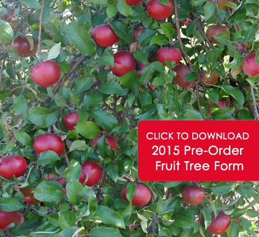 Download Pre-Order Fruit Tree Form Here