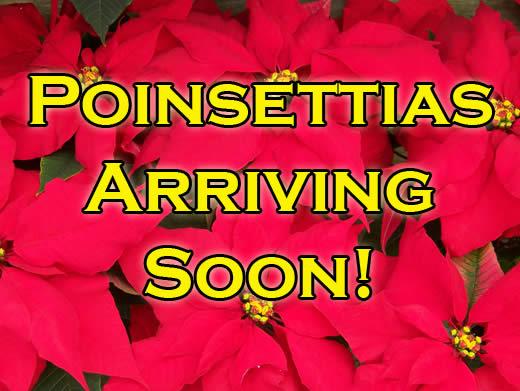 Poinsettias Arriving Soon