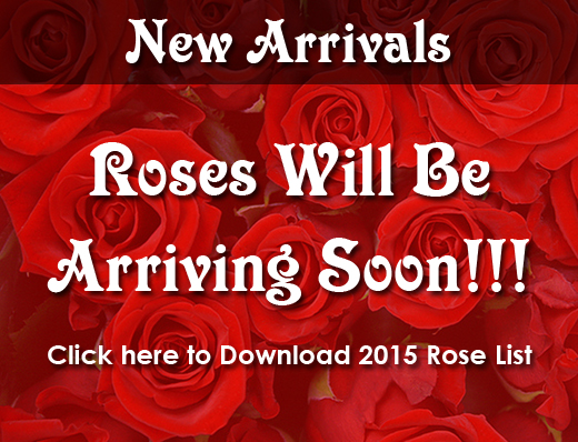 2015 Rose Catalog