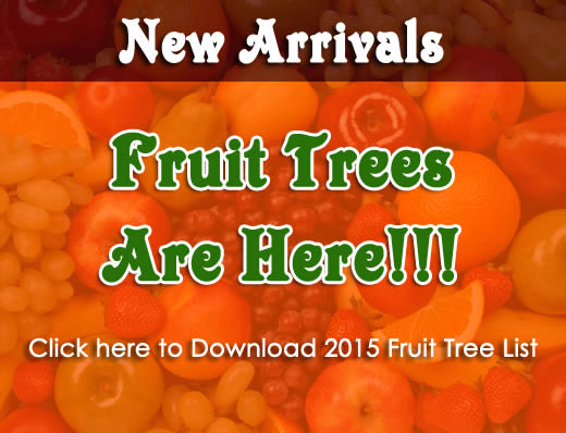2015 Fruit tree list