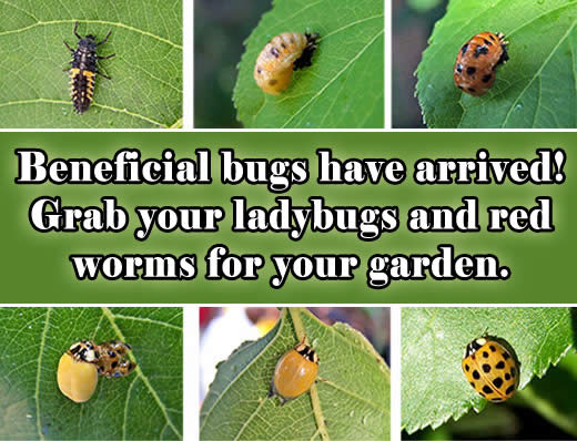 beneficial bugs are here