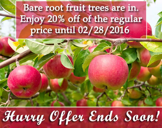 Bareroot Fruit Trees