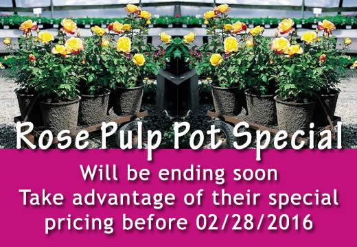Roses Pulp Pots