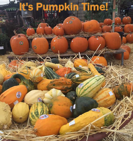 It's Pumpkin Time!