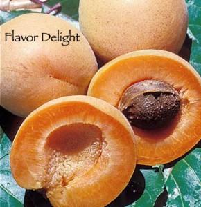 aprium flavor delight