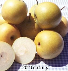 Asian Pear 20th Century