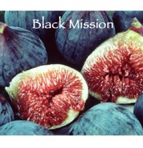 black mission