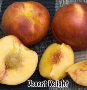 nectarine desert delight