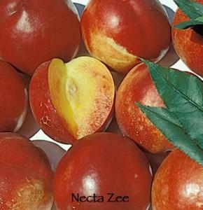 nectarine dwarf necta zee