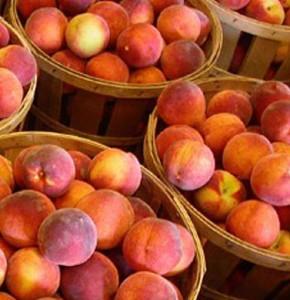 peach dwarf southern flame
