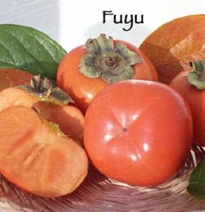 persimmon fuyu jiro