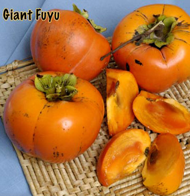persimmon giant fuyu