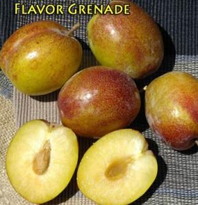 pluot flavor grenade