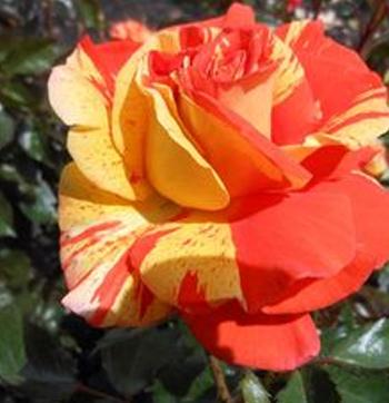 fruity-petals